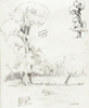 Pencil study, elm trees in Saltmarshe Park Yorkshire UK