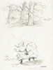 Pencil study, Beech and Elm trees.